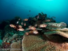 Rifflandschaft bei Banka Island