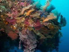 Korallenpracht auf der Liberty