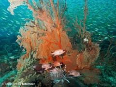 reef-life