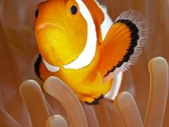 Nemo ganz klassisch