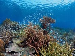 Rifflandschaft in Raja Ampat