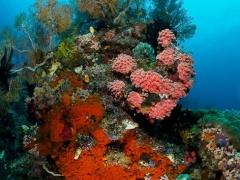 dicht bewachsener Korallenblock