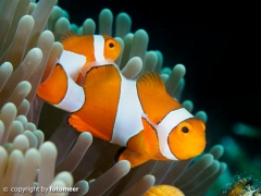Nemo lässt grüssen