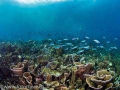 mitten im Riff