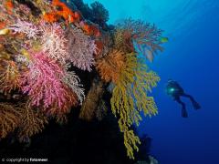 Rifflandschaft