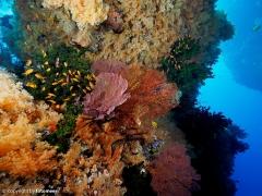 wunderbares Fiji