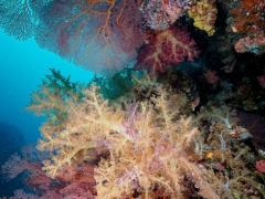 Korallen ohne Ende