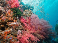Fiji's Unterwassertraum