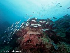 Riffdach mit Fischschwarm