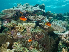 Nemo's Heim