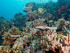 Korallentraum