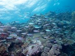 Riffdach mit Sardinen