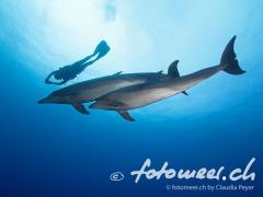 Delfine mit Taucherin