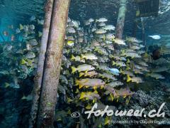 Pier bei Fakarava Süd 1