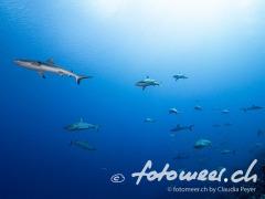 wall of sharks 4