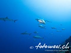 wall of sharks 2