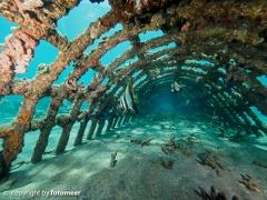 Konstruktion am Biorockprojekt (Korallenzucht)