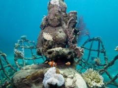 Buddha und Nemo