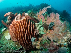 Riff auf Menjangan Island