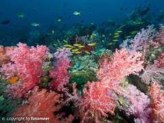 Korallenlandschaft