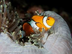 hallo Nemo