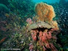 Korallenleben