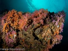 Riffblock mit Weichkorallen