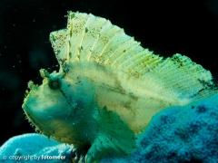 Schaukelfisch mit Hintergrundbeleuchtung