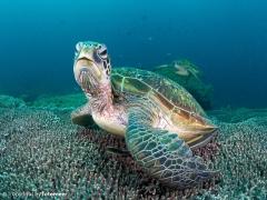 Schildkrötentreffen