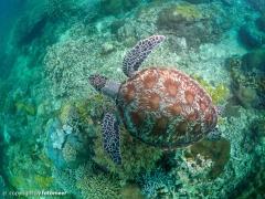 von oben.... Schildkröte