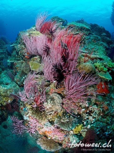 Breathtaker - wunderbares Riff in Fiji