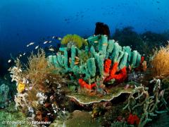 Schwämme im Riff
