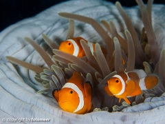 Nemo-Family