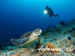 Karettschildkröte mit Taucher