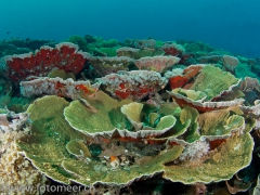 Hausriff bei Papua Paradise